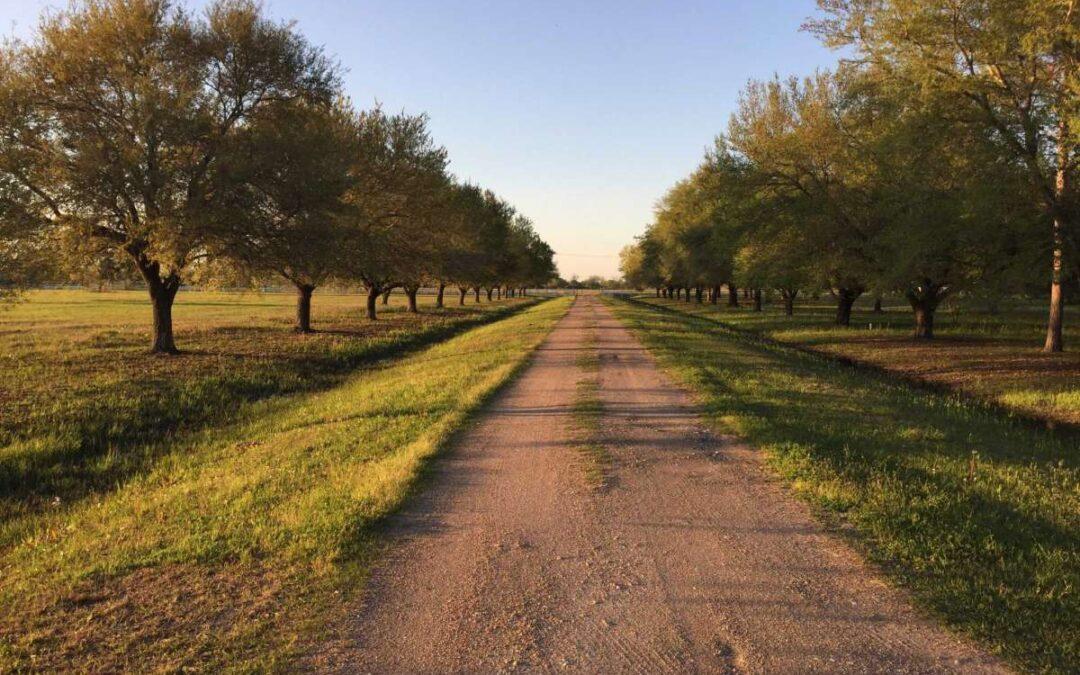 Massey Oaks Development Announcement Makes News